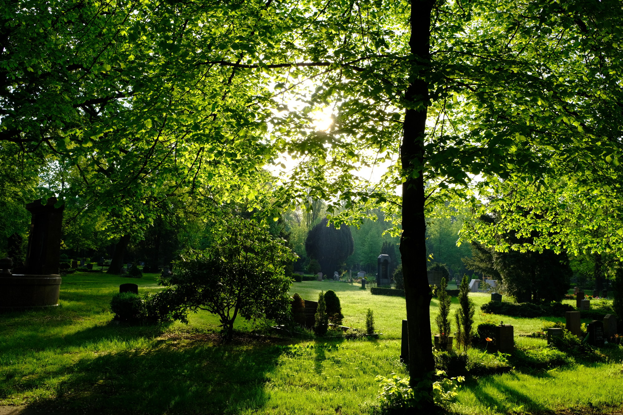 green burial options
